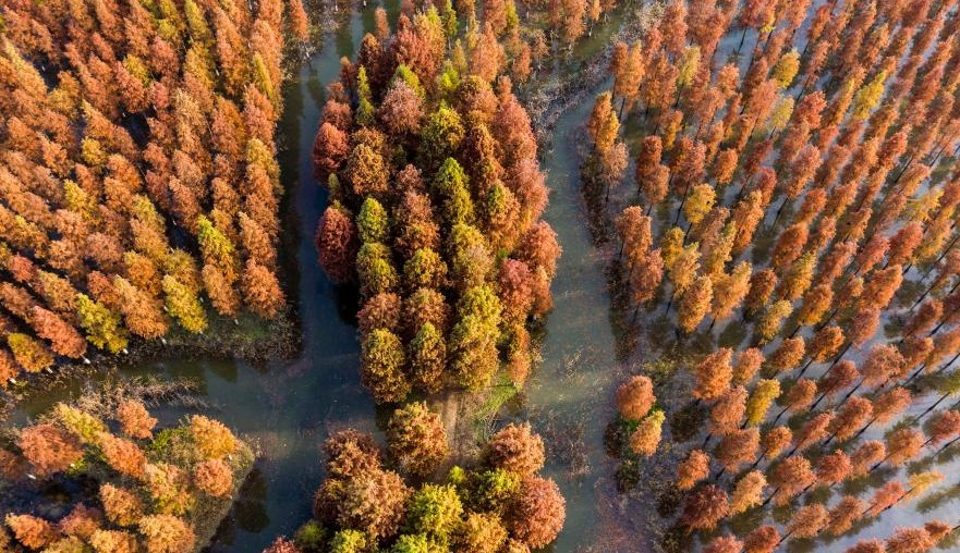 湿地杉林色彩斑斓
