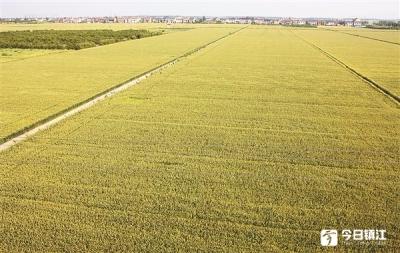 今年我市将建设高标准农田12.9万亩