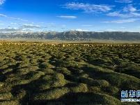 美丽的巴里坤草原