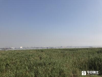 """【美丽长江中国行】记者蹲点-看长江生态湿地如何成为""""城市外滩、野趣天堂"""""""