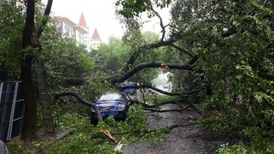 车在路边靠 大树轰然倒 损失由谁赔  车主不知道