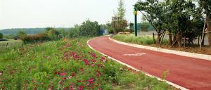 高架草莓、沙坪草皮、鲜花小镇,生态富民,一个比一个棒