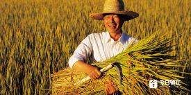 中央财政今年投入15亿 培育新型职业农民超百万