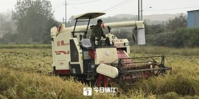 """提前一个多月,五塘村""""阳光""""有机水稻开镰收割了"""