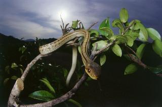 有图慎入|远古的恐惧?实验表明人类天生害怕蛇和蜘蛛