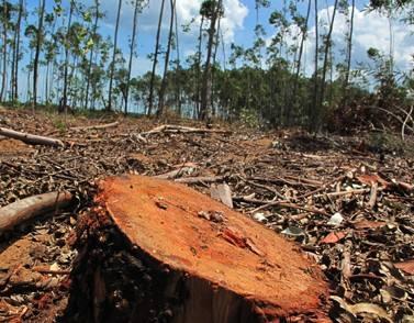 句容市森林警察大队及时制止一起重大滥伐林木案件