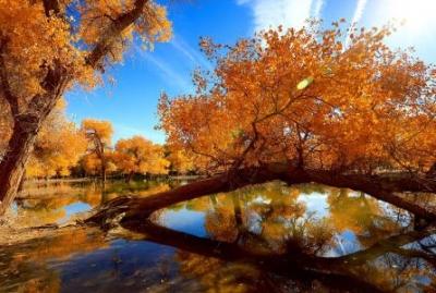 """赞""""秋""""——一幅金黄、美丽、多姿多彩的图画"""