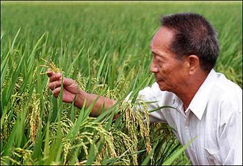 老院士再创新业绩-1149.02公斤!超级杂交稻亩产创世界新纪录