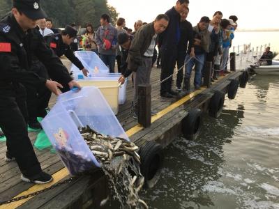 深水航道生态补偿进入尾声 15万尾鱼苗投放金山湖