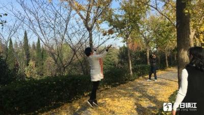 天气晴好,秋色撩人 市区公园周末赏秋客流旺