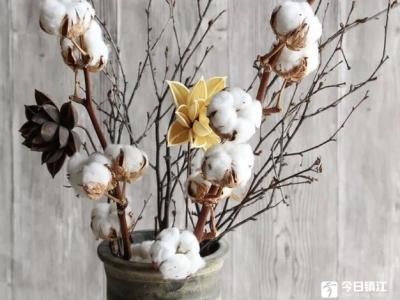 """临近圣诞花市俏,""""棉花""""成市场新宠"""