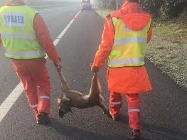 高速上撞到狗,受损车辆谁负责,目前仍于法无据