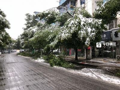 大雪压断树枝,镇江绿化部门及时处理570余处断枝
