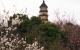 赏梅好去处,镇江宝塔山公园春节期间将免费开放