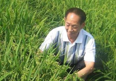 """7%耕地养活20%人口 创新让中国""""饭碗""""从""""吃得饱""""转为""""吃得好"""""""