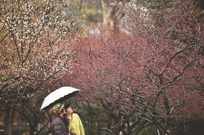 赏梅赏灯迎新春