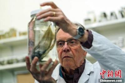"""""""世界最丑动物""""不再孤单 澳洲科学家发现其表亲"""