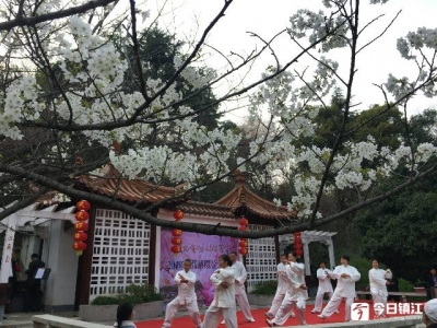 宝塔山公园开启浪漫樱花季