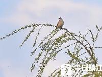 雨过天晴 小鸟枝头赏春