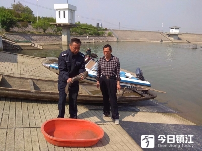 句容水库捕捞队意外捕获娃娃鱼,已主动上交!