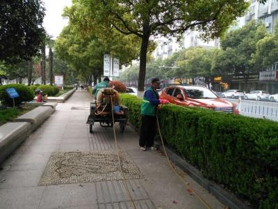 病虫害即将进入高发期,丹阳园林部门抓好晴好天气迅速防治