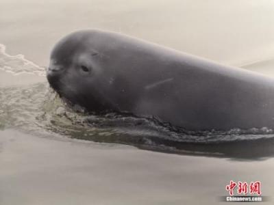 """【美丽中国长江行】南京为保护""""微笑精灵""""江豚,做出了这些努力"""