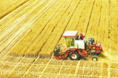 今年我国夏粮有望再获丰收  小麦市场价格保持稳定