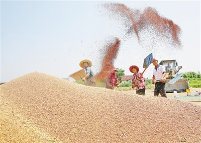 """小麦夏收超九成!全国夏粮即将迎来又一""""大丰收"""""""