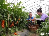 地产新品辣椒表示:我们不一样,水果味、萌萌哒!