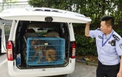 南京一4岁男童遭狼狗撕咬 多次伤人的恶犬为何还在小区?