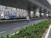 险!丁卯高架桥下市民横穿马路,绿化带被踩出多条小路