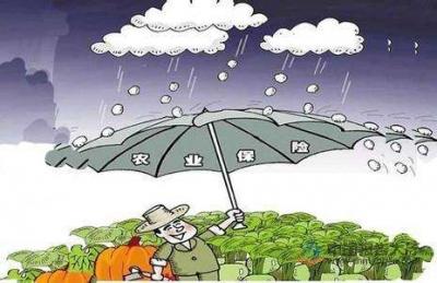 农业生产不能少了农险这把伞