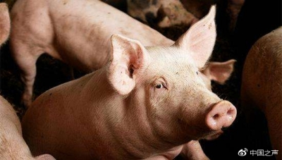 """应对""""海州区非洲猪瘟疫情"""",江苏部署落实综合防控措施"""
