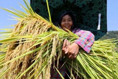 统计局:今年全国早稻产量为2859万吨 同比降4.3%