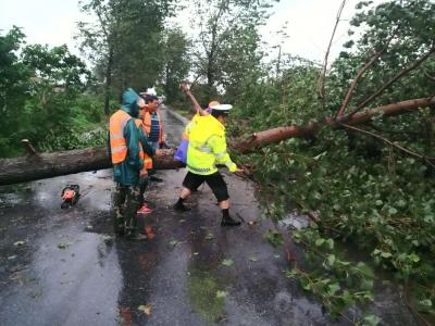 """台风过境大树变成""""拦路虎"""" 丹徒交警紧急处置还畅通"""
