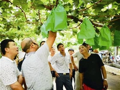 """【乡村振兴】坚持生态优先  实现""""三高""""发展  """"绿色""""为镇江农业持续发展抹上浓厚底色"""
