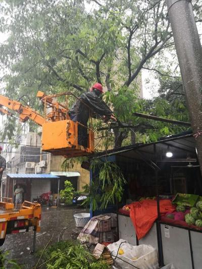 丹阳60余株树木被台风受损,百余名园林工人风雨中除险
