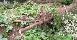 镇江运河风光带树木遭乱砍滥伐?