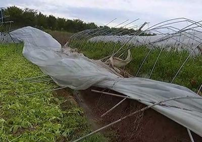 """农业生产""""靠天吃饭""""这场台风损失不小"""