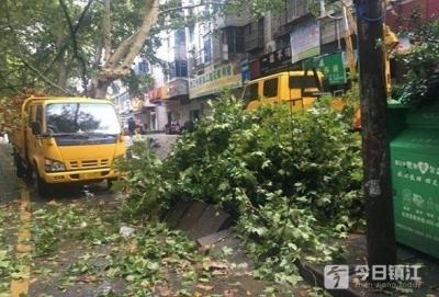 老小区内大树被刮倒  社区绿化及时排险