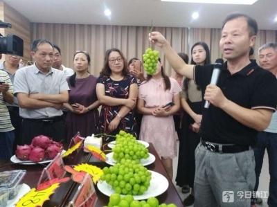 镇江6万亩葡萄园里品种丰富 这种葡萄卖到近500元/串