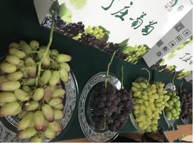 """12小时!从田间到餐桌,句容""""丁庄葡萄""""走进上海!"""