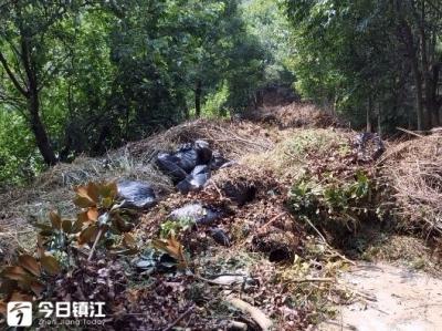南山小路大量枯枝堆积近两百米长,存消防安全隐患!养护处:立即处理