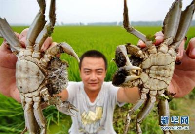 """咋样才算是""""中国好螃蟹""""?这份《标准》值得参考一下"""