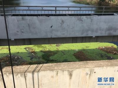 上游洪水来袭下游鱼蟹死亡,泄洪为何变泄污?