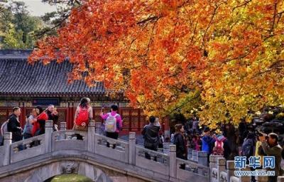 想看枫叶?请先预约——北京香山下月起实施游客预约制参观