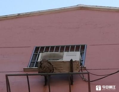 """窗外惊现""""不速之客""""  丹阳一小区惊现巨型马蜂窝吓坏居民!"""