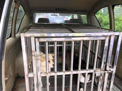 治理狗患不松懈,润州警方一直在行动,又有6条流浪狗被收容