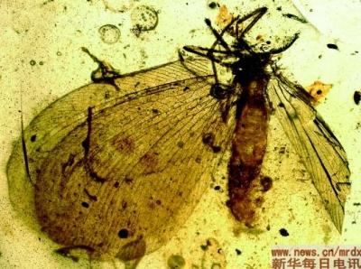 """一亿年前的昆虫已经自带""""天线""""可远程交流了,这是中科院考证出来的"""