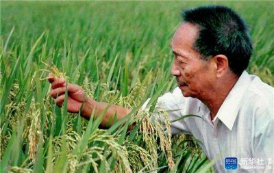 亩产1203.36公斤:袁隆平团队的超级杂交稻再创纪录